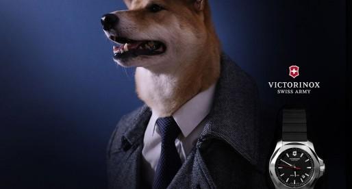 Lo strano caso del cane modello