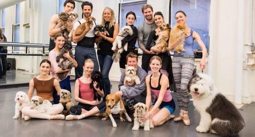 I cani dell'American Ballet Theatre