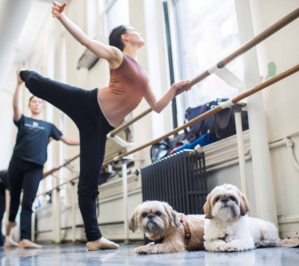 American-ballet-theatre-the-dogist-shi-tzu